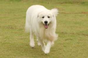 为什么狗狗喜欢跟着主人